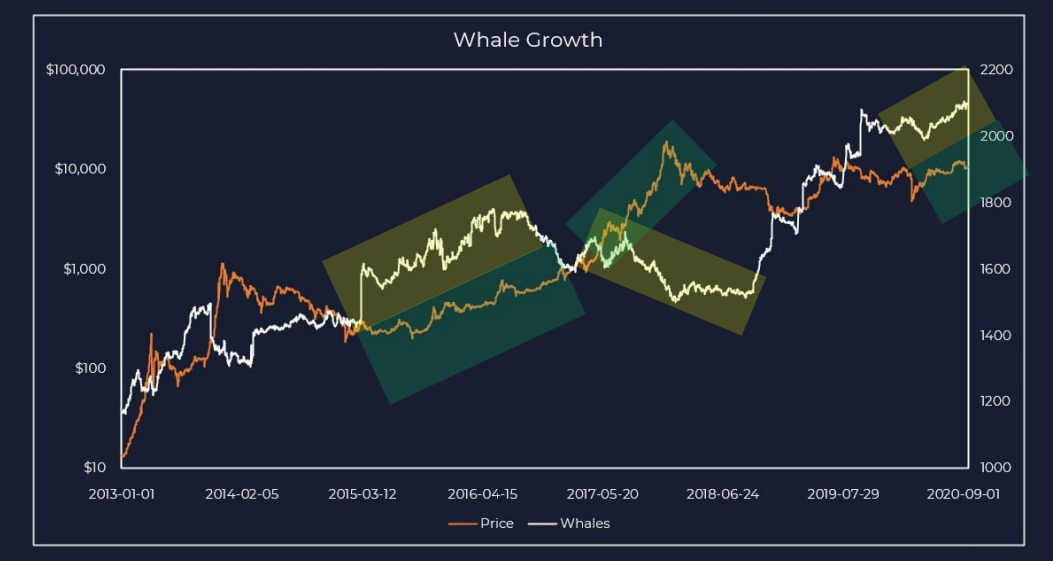 Bitcoin whale vs. price growth trends